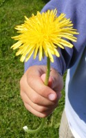 Dandelion for Mom